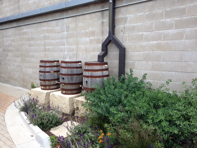 rain barrel harvesting