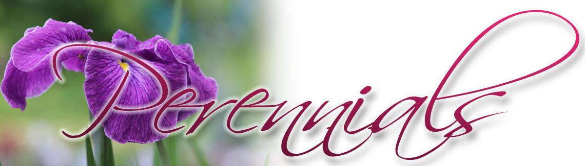 Perennials-Title