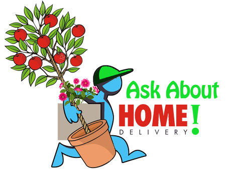Ask about Homestead Garden Center Home Delivery Service for your Garden Plants, Trees & Shrubs