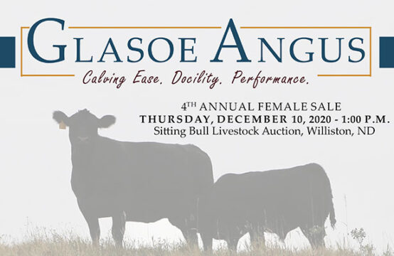 December 10, 2020 – Glasoe Angus 4th Annual Production Sale