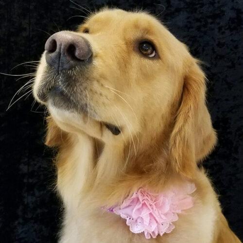 Janry Pet Resort, Thera Clean, Pet Resort, Dog Grooming, Stewartsville NJ, Salon