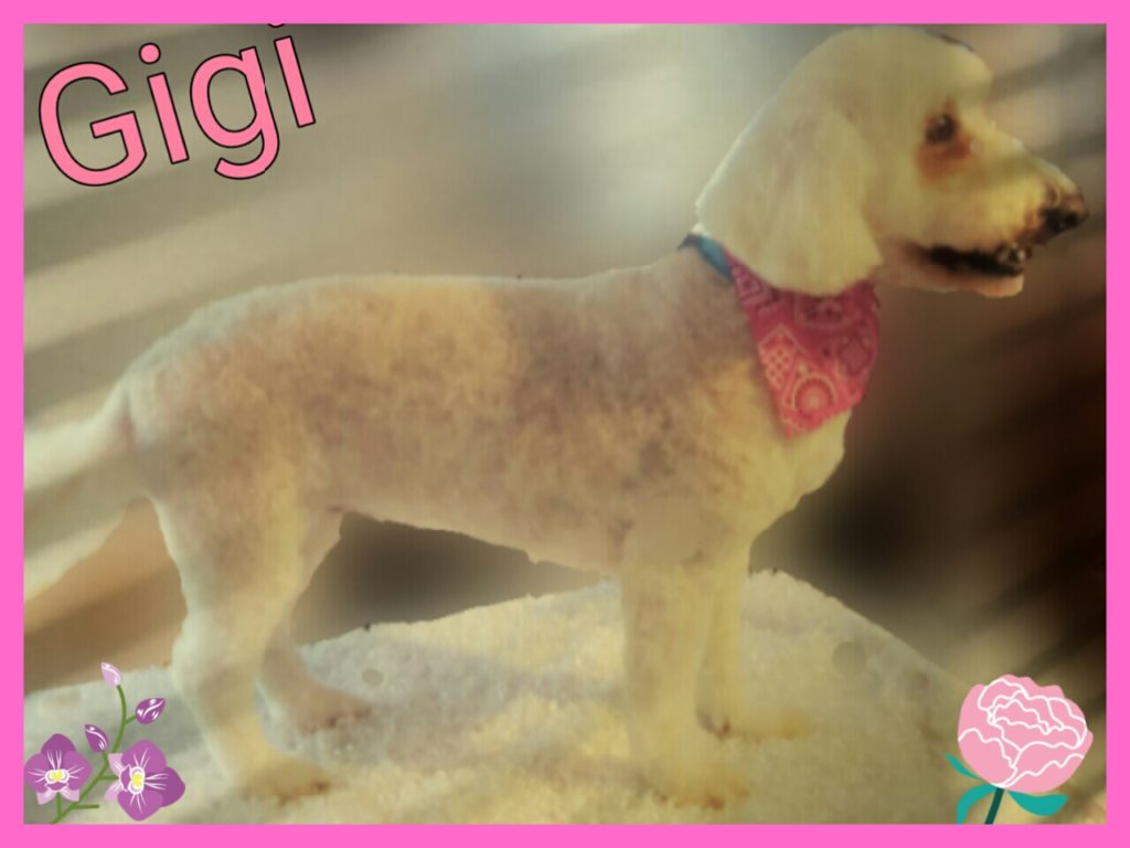 Janry Pet Resort, Thera Clean, Pet Resort, Dog Grooming, Stewartsville NJ, Salon
