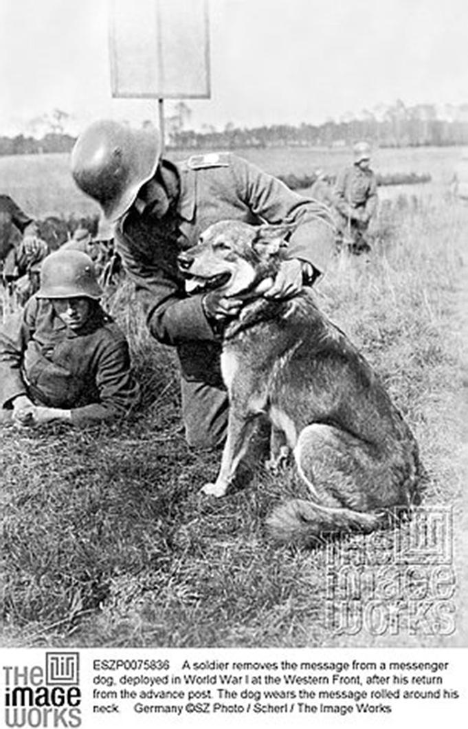 Janry Pet Resort, Janry German Shepherds, German Shepherd, Stewartsville NJ, Puppies, Puppy