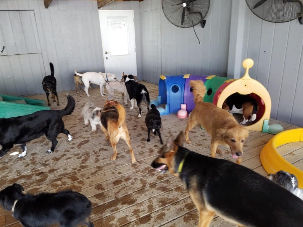 Janry Pet Resort, Dog Lodging, Pet Resort, Dog Boarding, Stewartsville NJ