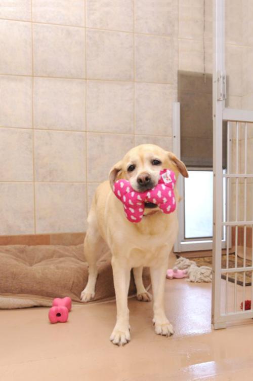 Janry Pet Resort, Dog Lodging, Pet Resort, Dog Boarding, Stewartsville NJ