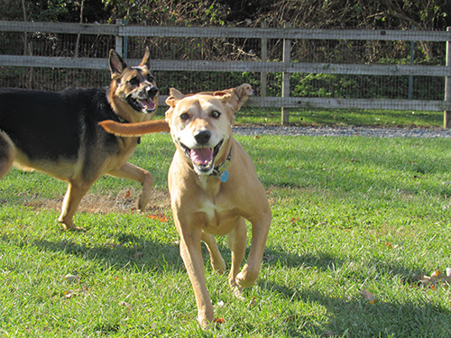 The happiest smiling face of a pup playing with friends at Janry Pet Resort