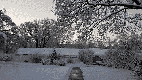 Kennel Snow