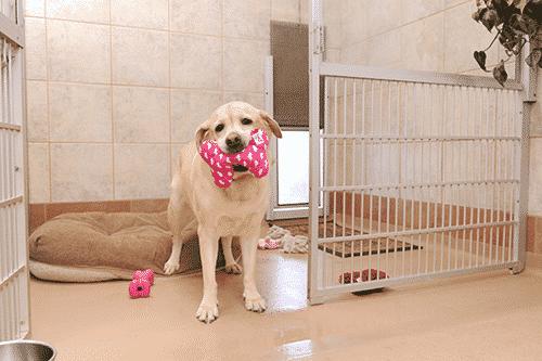 Pup in Suite
