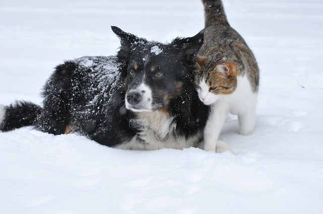Pet Dog and Cat in snow caring for our customers