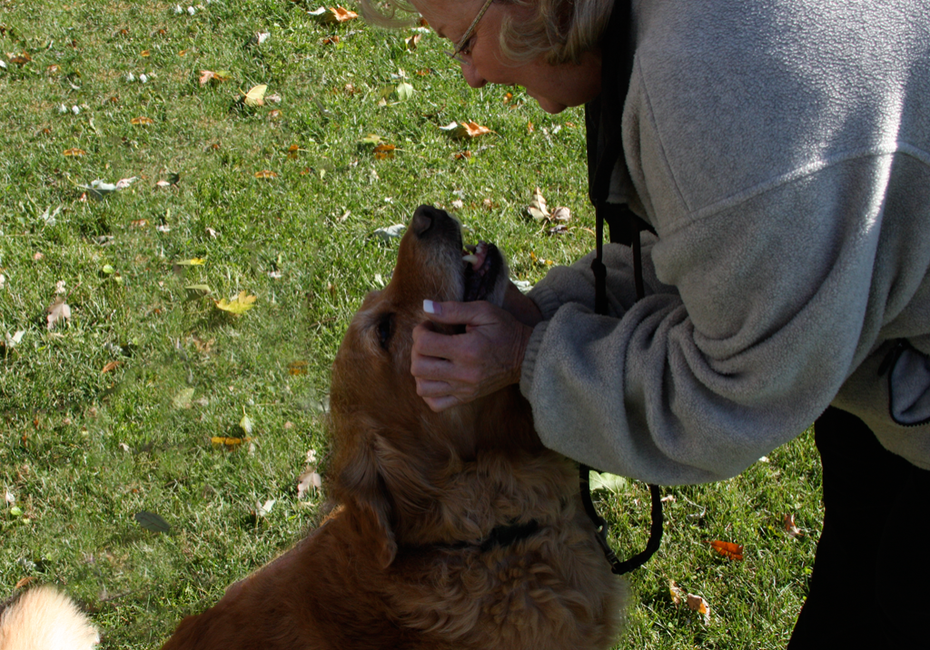Janry Pet Resort, Jane Dancosse, Dog Boarding, Dog Training, Dog Grooming, Dog Training, Stewartsville NJ