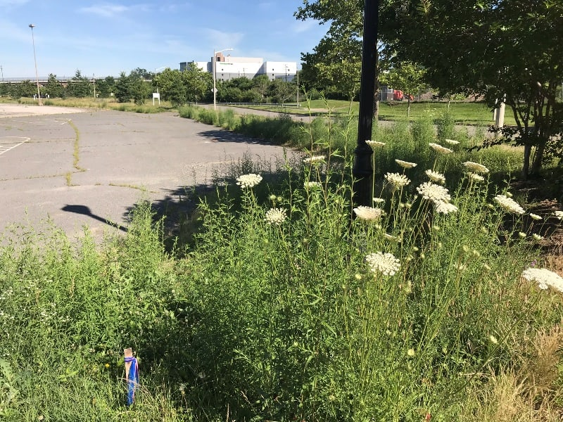 Neighbors in Eisenhower East in Alexandria, Virginia who live near a parking lot at Hoffman Town Center owned by developer StonebridgeCarras contacted us for help.