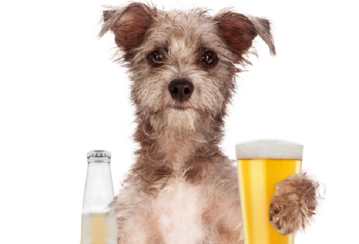 Doggy Yappy Hour is an Old Town Alexandria, Virginia institution and is held Tuesday's in the Alexandrian courtyard from 4:00 PM April through October.