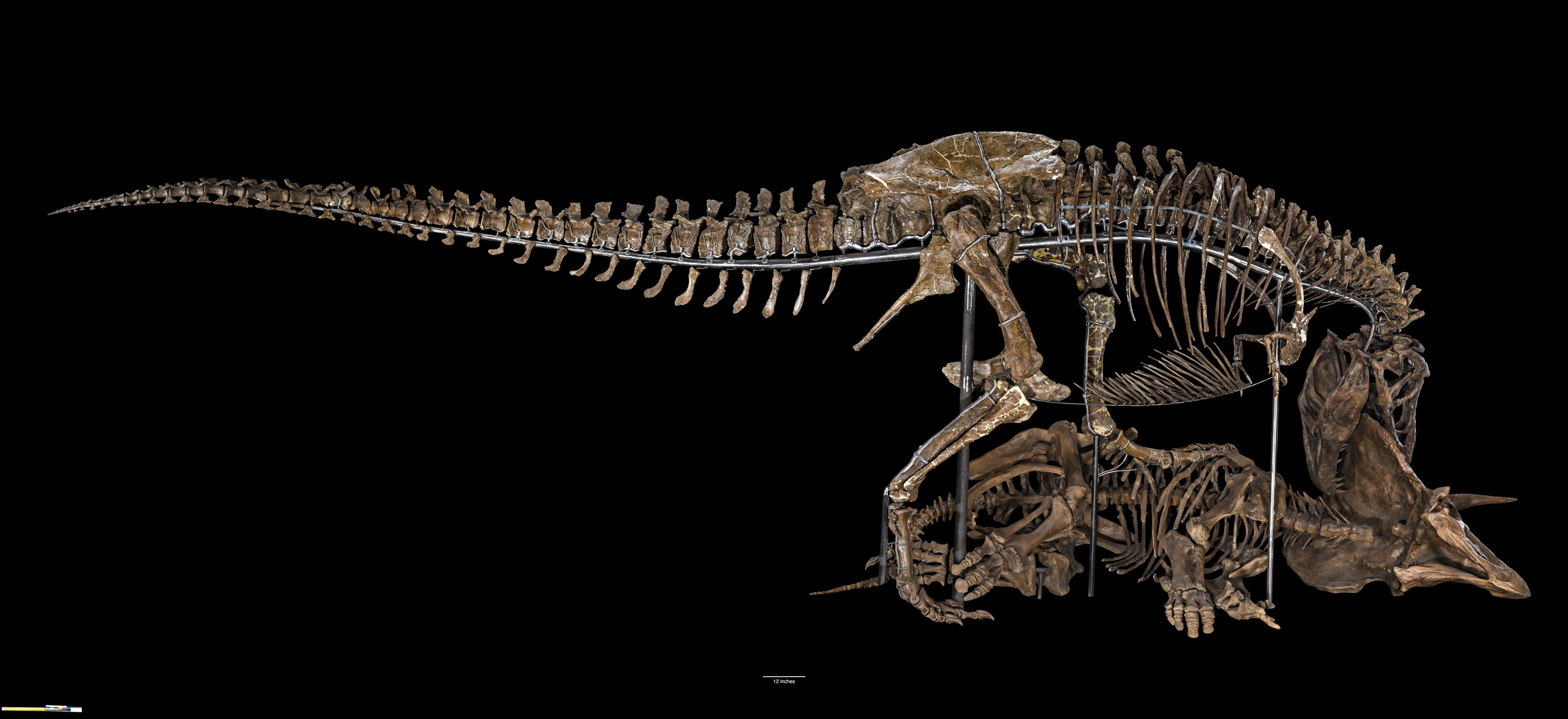 The Smithsonian's National Museum of Natural History will reopen its dinosaur and fossil hall Saturday, June 8.
