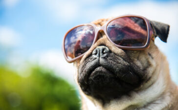 Every Wednesday ('WagsDay'),Whiskey & Oyster in the Carlyle neighborhood of Alexandria, Virginia is hosting a dog-friendly happy hour on their front patio.