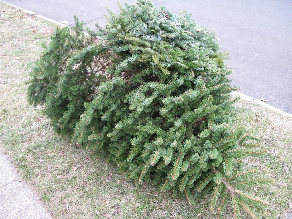 The City of Alexandria, Virginia is collecting Christmas trees for recycling from residents who receive City trash service NOW through Friday, January 17, 2020.