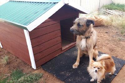 Pet Houses - THE KELPIE