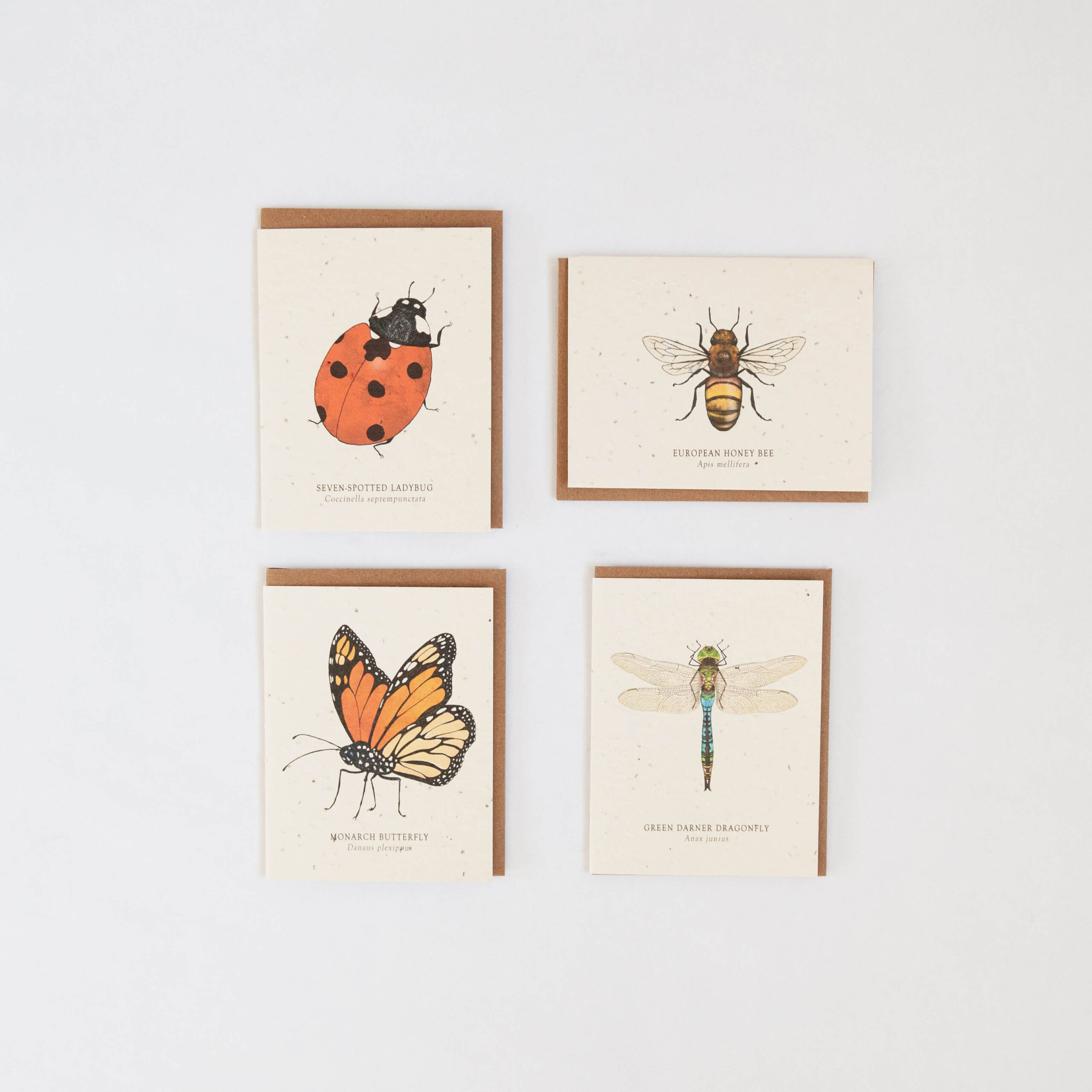 Plantable Seed Cards