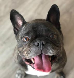 An adorable dog in need of a dog daycare near walnut Creek, CA