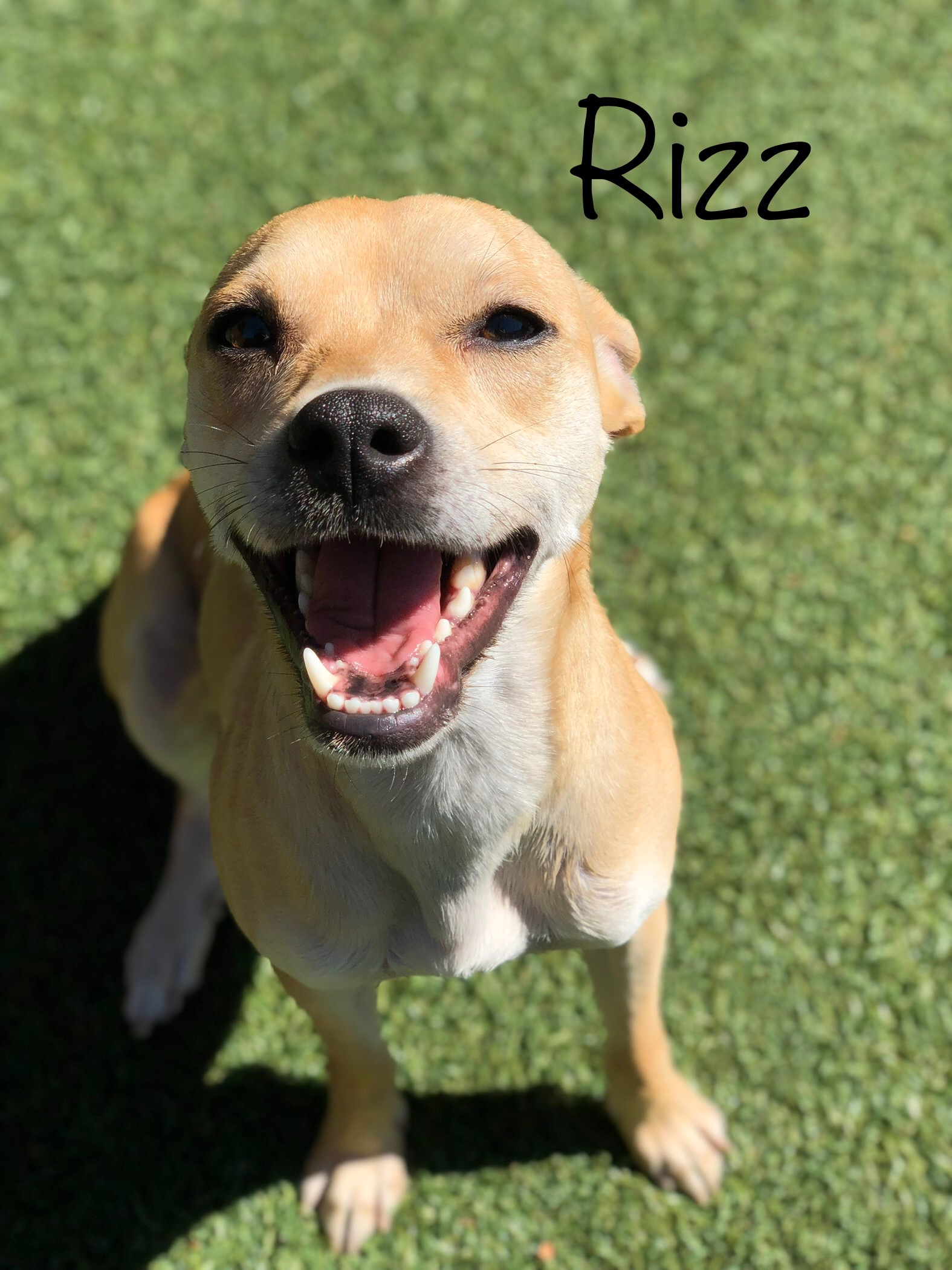 ~ Dog Of The Week ~ Rizz