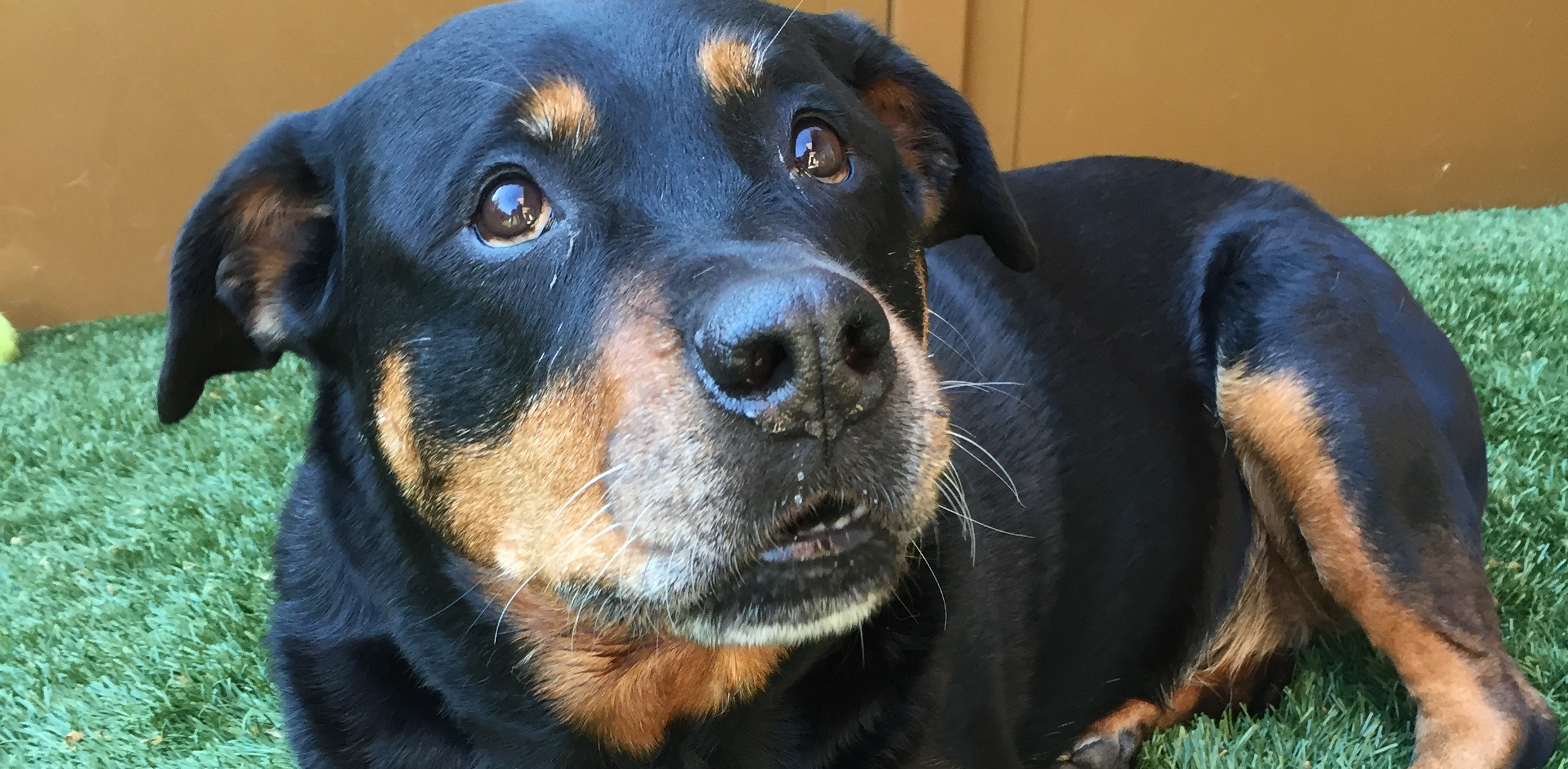 ~ Dog Of The Week ~ Dyta