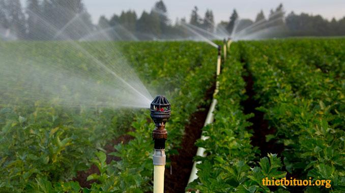 Ảnh tưới Béc tưới phun mưa Nelson trên 10m - Mô hình hệ thống tưới phun mưa
