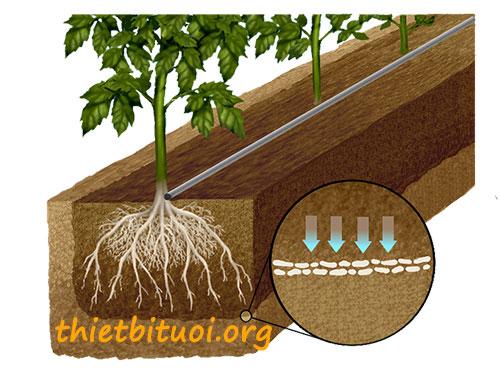 Những lợi ích từ tưới nhỏ giọt của vùng ướt
