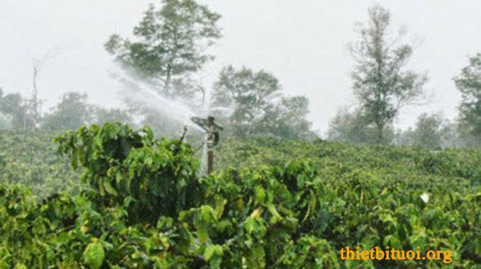 Súng bắn phun mưa cây cà phê - Thiết kế hệ thống tưới phun mưa