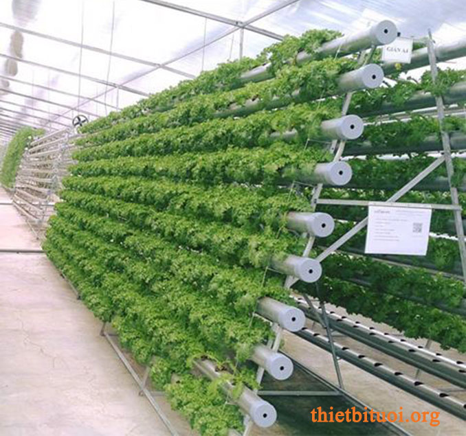 Cách trồng rau sạch tại vườn nhà - Trong vườn nhà màn