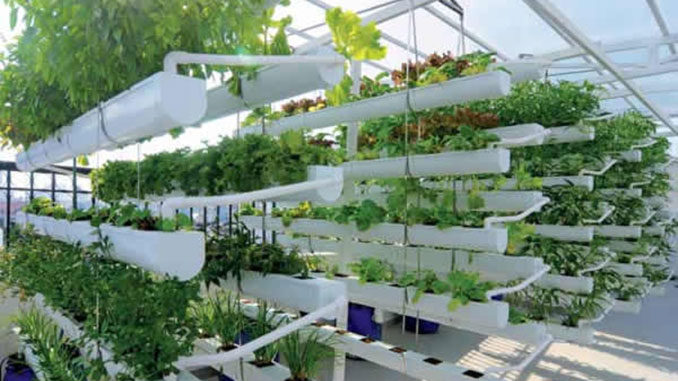 Mô hình vườn rau sạch tại nhà - Trồng trong trong máng