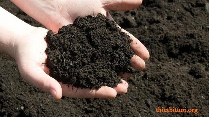 Đất trồng rau sạch tại nhà dùng phân hữu cơ, trùn quế