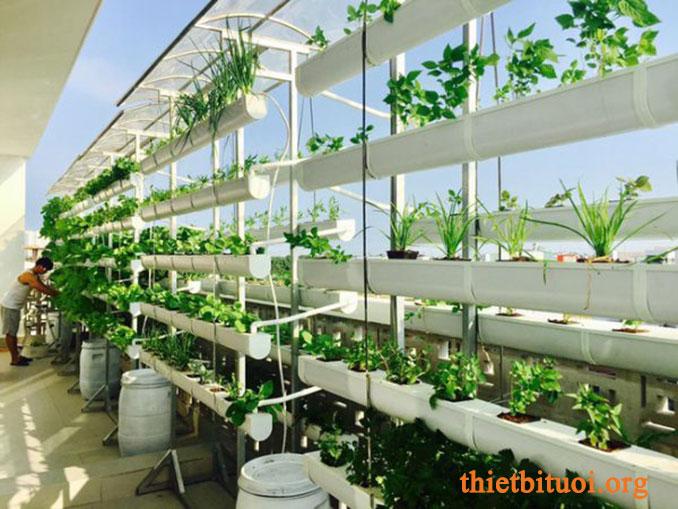 Đất trồng rau sạch tại nhà dùng phân hữu