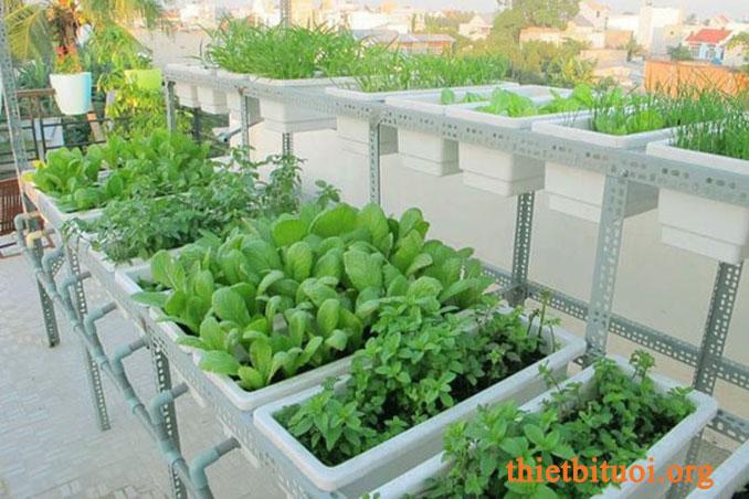 Kinh nghiệm trồng rau sạch dùng các giá đở bằng sắt chống rỉ có sẵn
