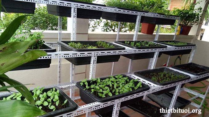 Các kinh nghiệm trồng rau sạch - Mô hình vườn rau sạch tại nhà
