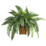 Boston-Fern-Plant-Rentals