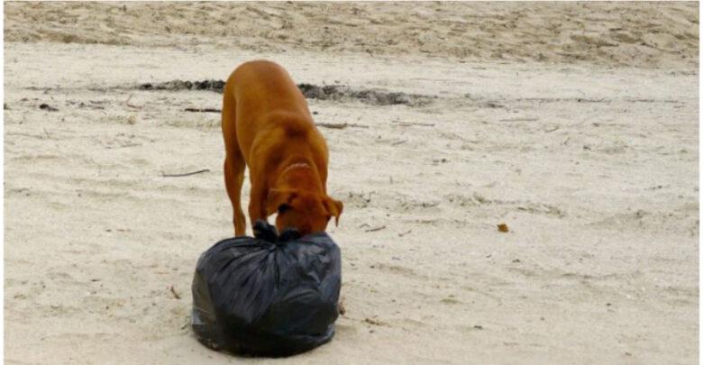 En Tzintzuntzan, perros encuentran una pierna humana