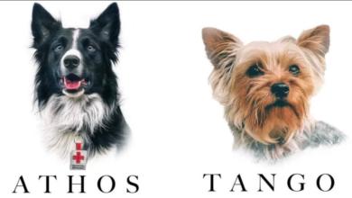 athos tango perros