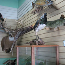 Taxidermy Shop organized on Storewall Panels