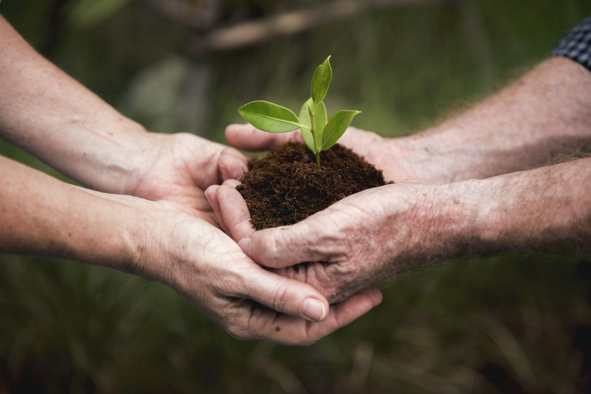 environmental-conservation-plant-sustainability-P9QCM9H-min