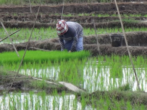 VILLAGE TOUR - RICE FIELDS