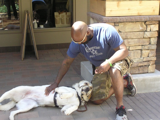 From PTSD and Sniper Fire, to Dogs That Heal