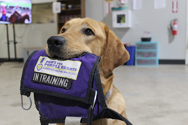 Paws for Purple Hearts improves the lives of America's Warriors