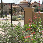 Early spring flowers in low maintenance desert garden | 2010 Xeriscape Award