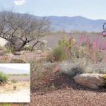 Low maintenance desert garden