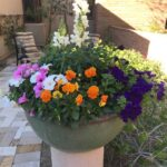 Snap dragons, pansies, and petunias create a striking statement pot.