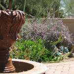 The Fosdick residence won 1st place in 2010 for the Professional Landscape Category in the Arizona-Sonora Desert Museum Xeriscape contest.