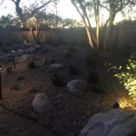 Garden space with desert plantings, berm, and custom lighting.