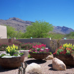 The Contained Gardener by Sonoran Gardens