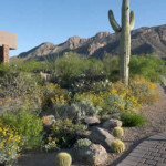 Cacti and native shrub plantings along concrete paver driveway