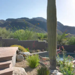 New plantings around existing Saguaro at raised flagstone patio | 2005 ALCA Award of Excellence