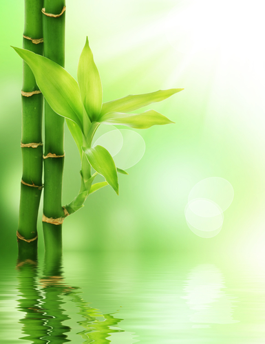 Bamboo Cypress fragrance